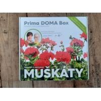 Prima DOMA Box - MUŠKÁTY - bílé
